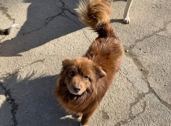 Bruno klein bruin hondje