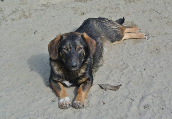 Hondje Bubu nu in Nederland