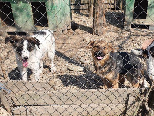 Puppy's Frida en Geta