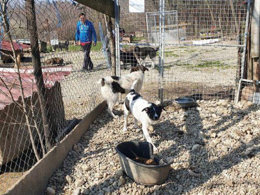Puppy Gerda in het asiel