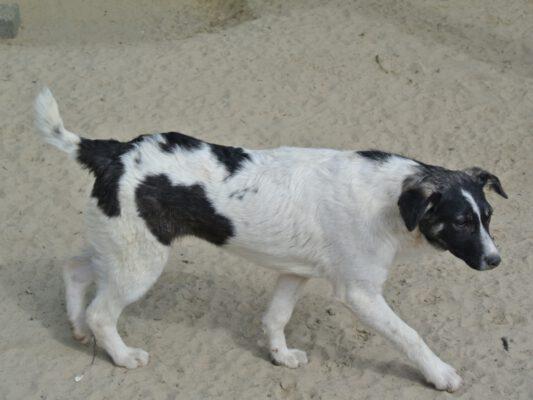 Gerda zwart wit hondje