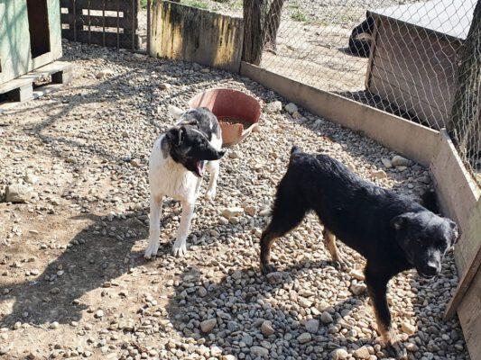 Puppy's Gerda en Gina