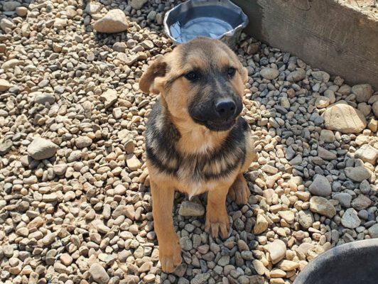 Puppy Geta
