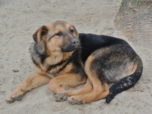 Geta pup van 6 maanden