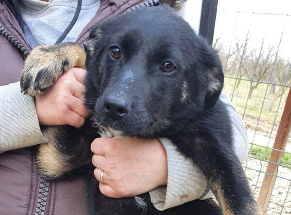 Pup Gina