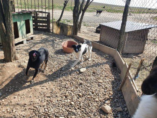 Puppy's Gina en Gerda