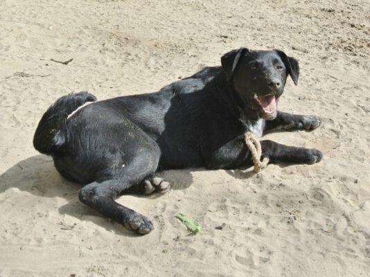 Tanya zwarte pup