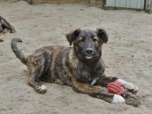 Puppy Tara gestroomd pelsje