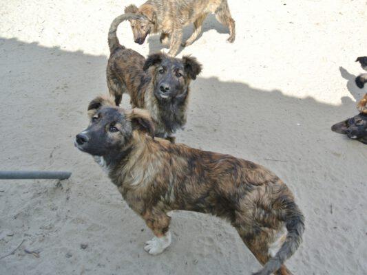 Puppy Tara met tijgerprintje