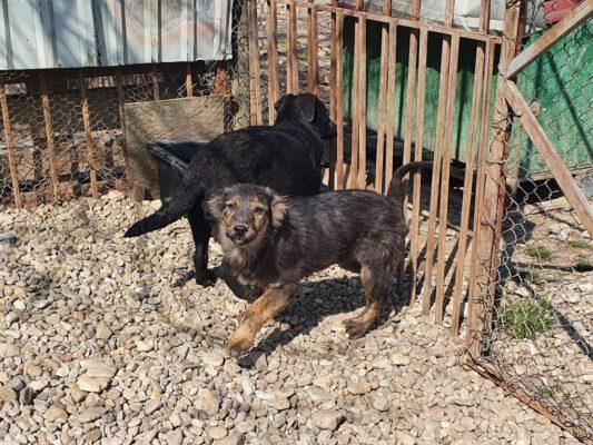 Pup Tedy in het asiel