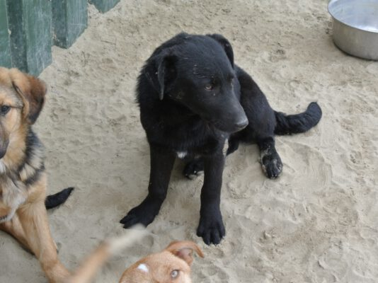 Pup Tisa half jaar oud