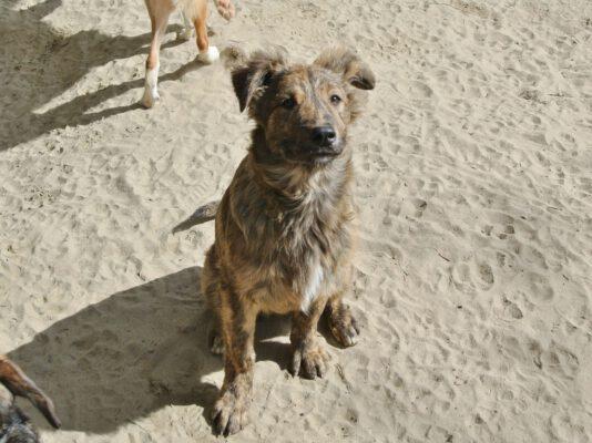 Puppy Tobi met tijgervelletje