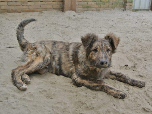 Pup Tobi een tijgertje