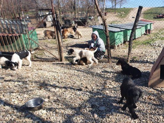 Puppies in het asiel van SOS Dogs