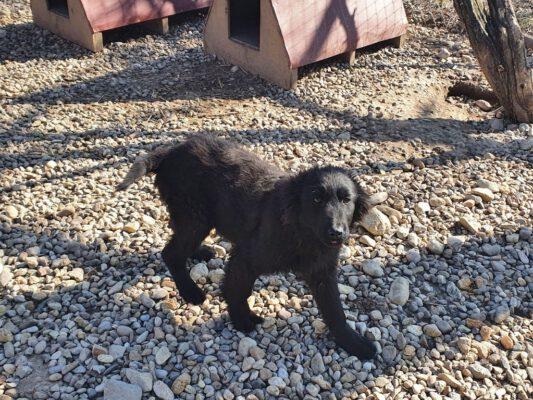 Puppy Vlad