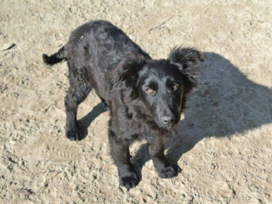Vlad mooie zwarte pup