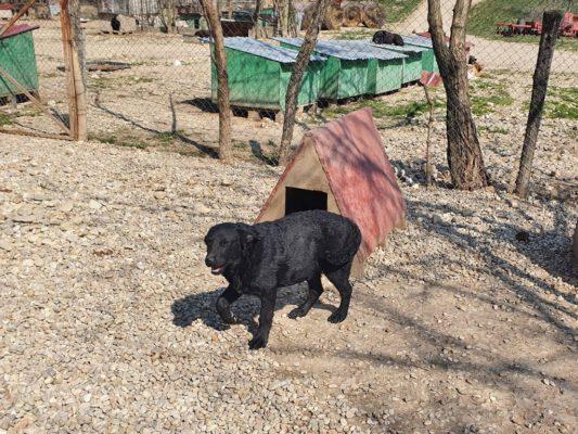 T-puppy's buiten in het asiel