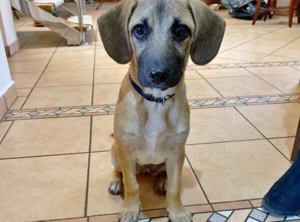 Puppy Amy
