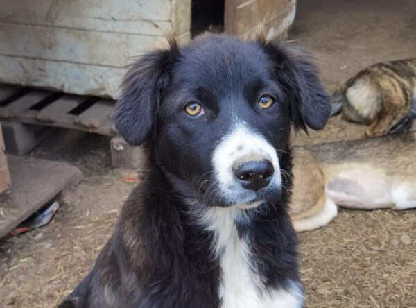 Pup Chloe met wit snoetje