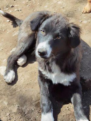 Pup Chloë in het asiel
