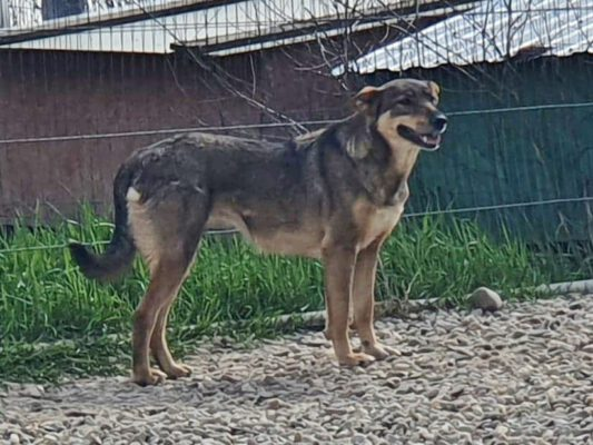 Cica in het asiel in Roemenië