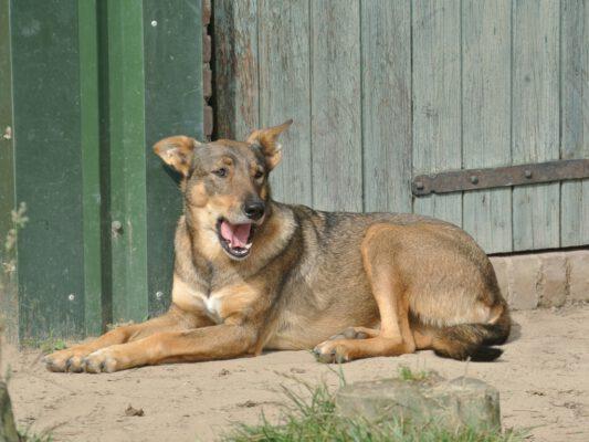 Cica prachtige jonge hond