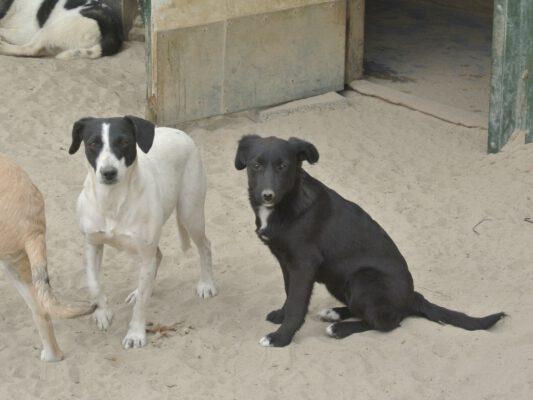 Moeder Flora en pup Lilly