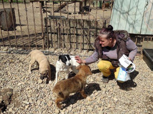 Flora en haar puppy's