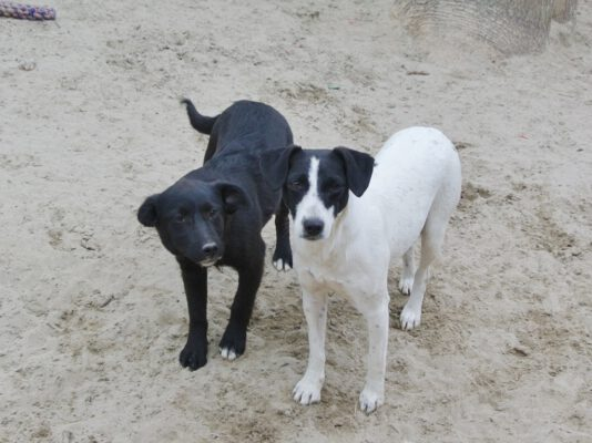 Flora zwart-wit hondje