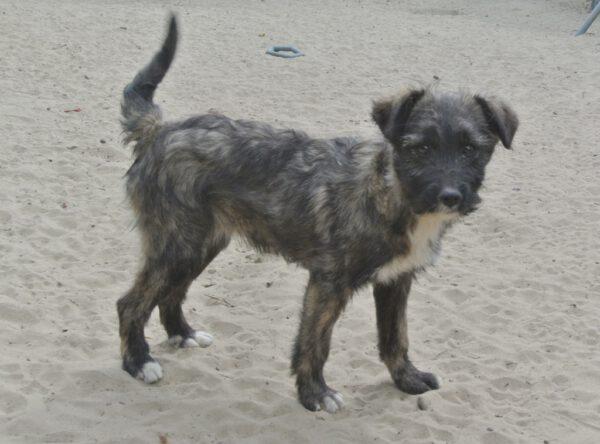 Puppy Francesca