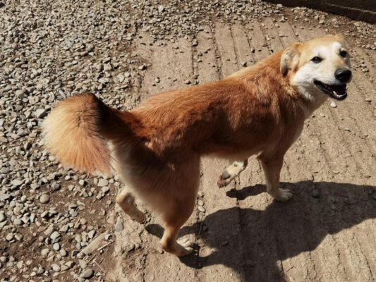 Gemma goudblond hondjee