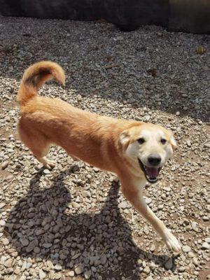 Gemma goudblond hondje