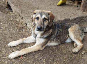 Pup Grace met slungel lijfje