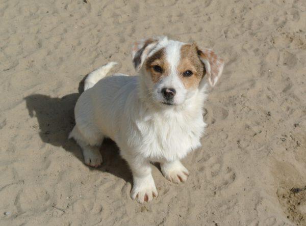Kleine pup Hector