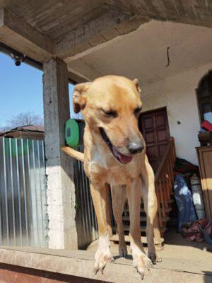 Hondje Hera hele leven in het asiel