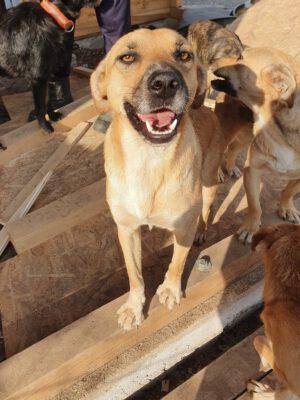 Hondje Hera in het asiel