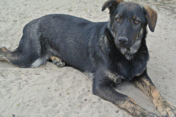 Leila pup van 6 maanden