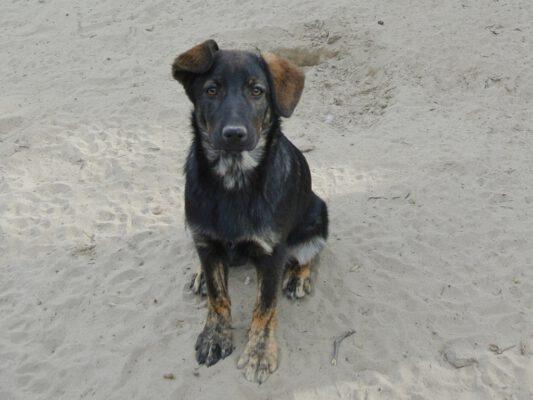 Pup Leila 6 maanden