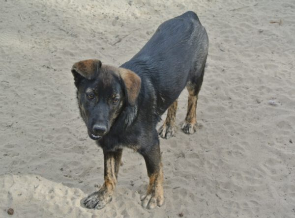 Pup Leila wil een baasje