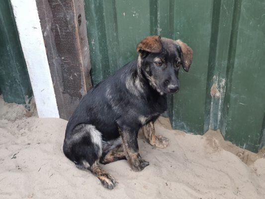 Pup Leila met grappige oortjes