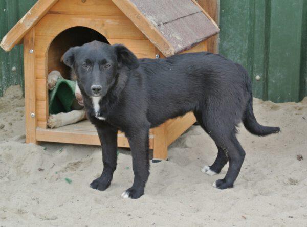 Pup Lilly lief meisje