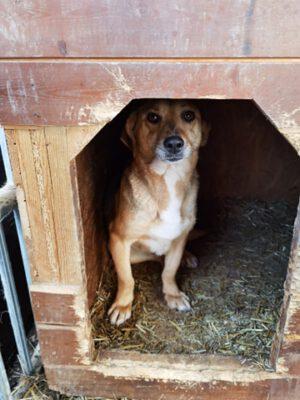 Hondje Mara in het hondenhokje