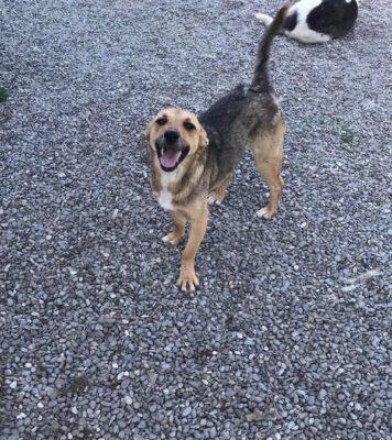 Hondje Mara blij in het asiel