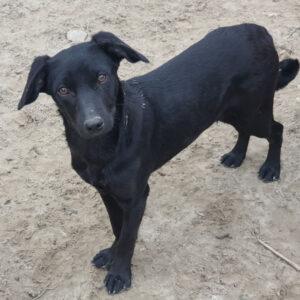 Pup Mara zwart hondje