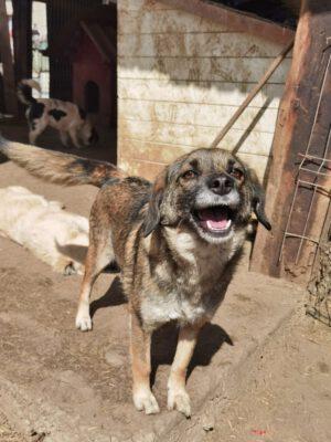 Marisa lief hondje