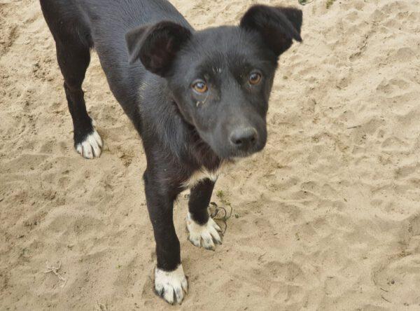 Puppy Merida zwart met witte teentjes