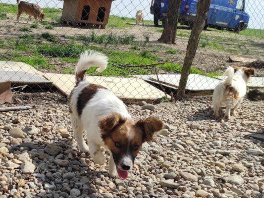Puppy Milan