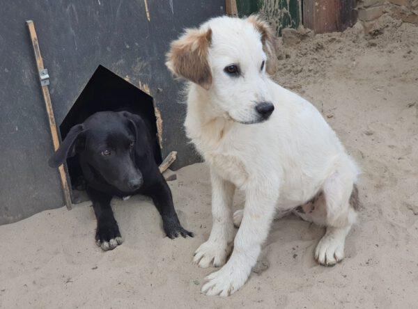Moris leuke puppy