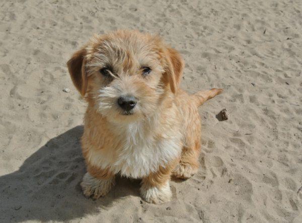Nala schattige kleine pup
