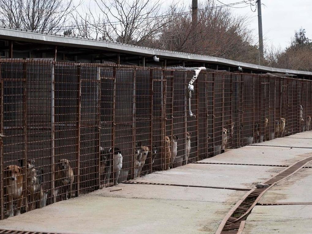 Honden in Odai Shelter
